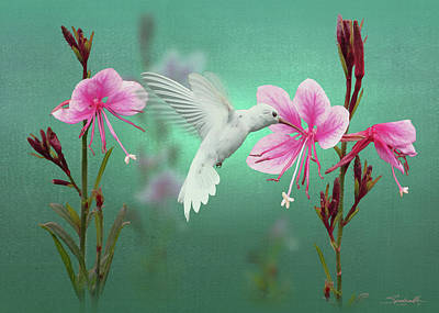 White Hummingbird And Pink Guara Poster