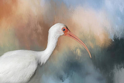 Poster featuring the photograph White Ibis - 2 by Kim Hojnacki