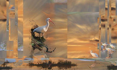 White Ibis In Abstract Poster
