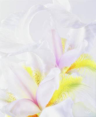 White Iris Poster by Leland D Howard
