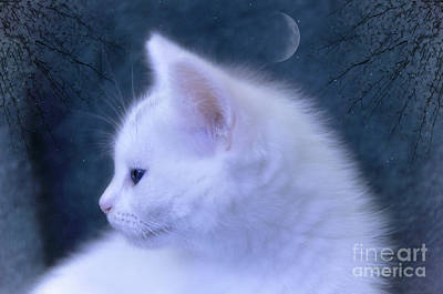 White Kitten At Night Poster