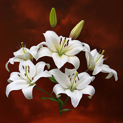 White Lilies On Red Poster