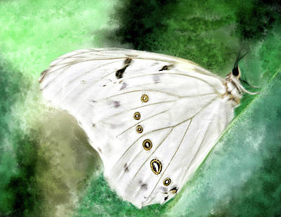 White Morpho In St.thomas Poster by Edelberto Cabrera