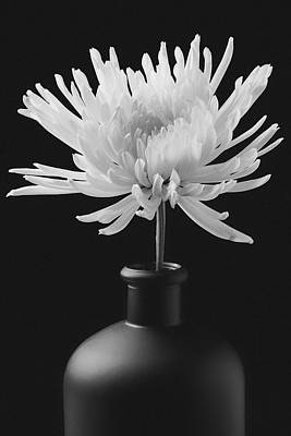 White Mum In Black Vase Poster by Garry Gay