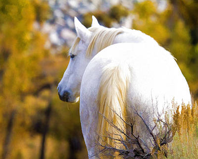 White Mustang Mare Poster