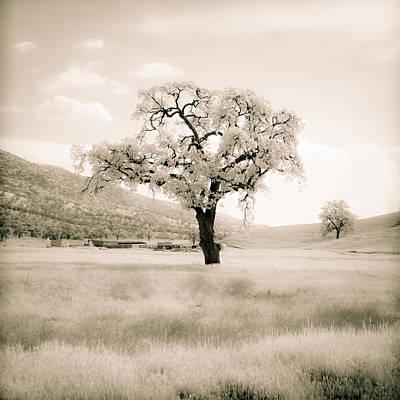 White Oak Poster