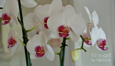 White Orchid Mothers Day Poster by Marsha Heiken