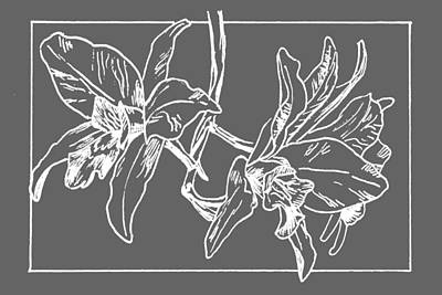 White Orchid On Transparent Background Poster by Masha Batkova