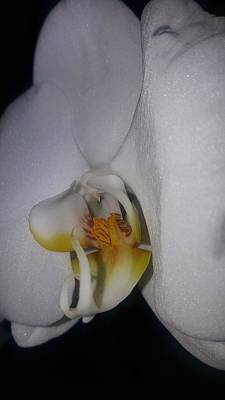 White Orchid Poster by Snow White