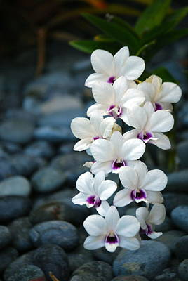 Poster featuring the photograph White Orchids by Debbie Karnes