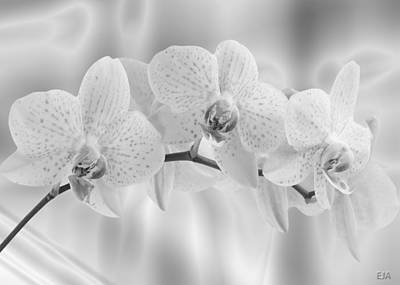 White Orchids Poster by Eric Amsellem