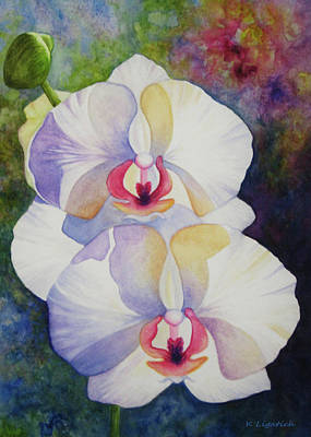 White Orchids Poster by Kerri Ligatich