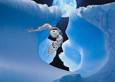 White Owl Poster by Jack Zulli
