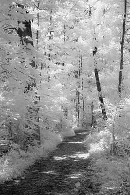 White Path Poster