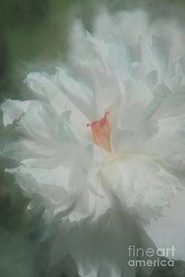 Poster featuring the photograph White Peony by Benanne Stiens
