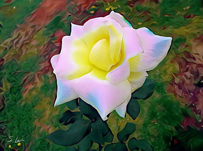 White Rose 02 ...22.54 Photograph Picture Poster