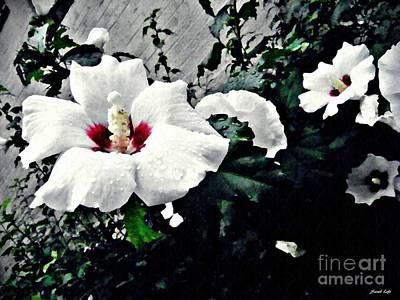 White Rose Mallows 2 Poster