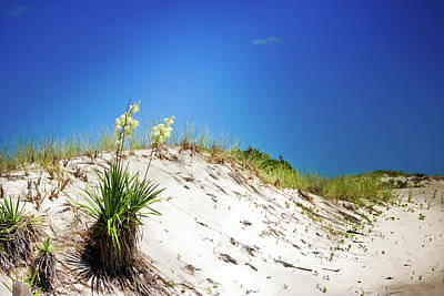 White Sands And Yucca Plant Poster