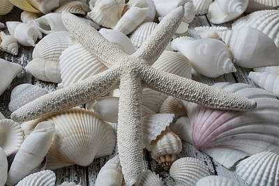 White Starfish On Seashells Poster by Garry Gay