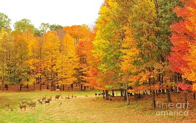 White Tail Deer In Autumn Poster