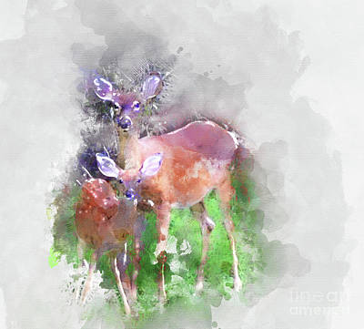 White Tail Deer In Watercolor Poster