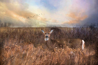 Poster featuring the photograph White Tail by Robin-Lee Vieira