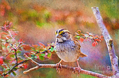 White Throated Sparrow - Digital Paint Poster by Debbie Portwood