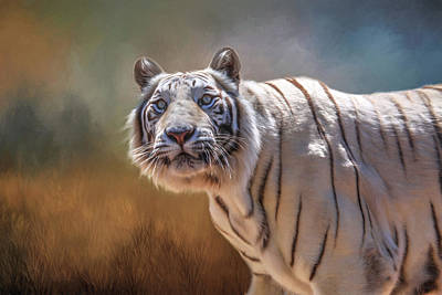White Tiger Portrait Poster by Donna Kennedy