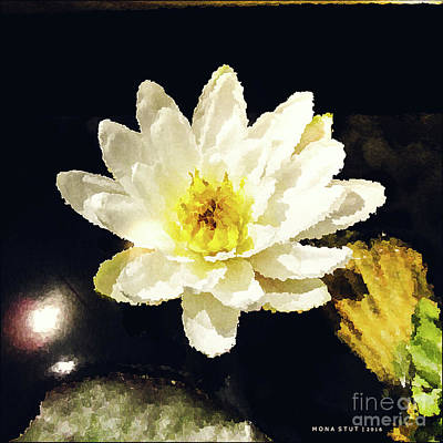 White Water Lily Poster by Mona Stut