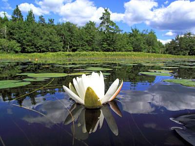 White Waterlily On A Lake Poster