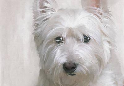 White West Highland Terrier Westie Poster