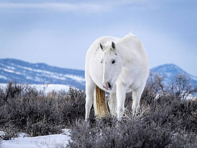 Poster featuring the photograph White Wild Horse Mystic Of Sand Wash Basin by Nadja Rider