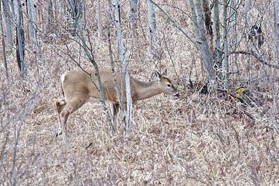Poster featuring the photograph Whitetail Deer 1171 by Michael Peychich