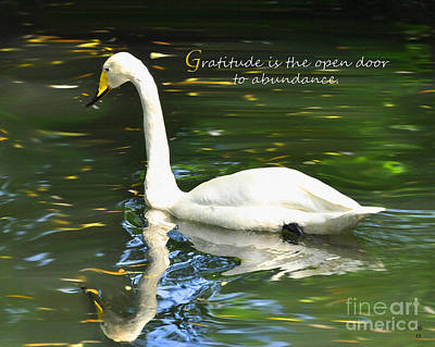 Poster featuring the painting Whooper Swan Gratitude by Diane E Berry