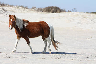 Wild Assateague Ponies 2 Poster