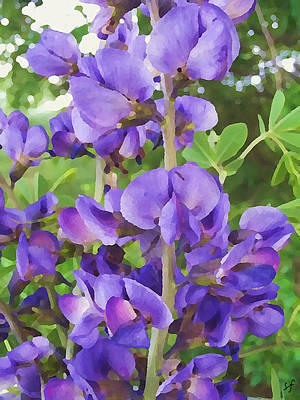 Poster featuring the digital art Wild Blue False Indigo by Shelli Fitzpatrick