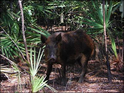 Wild Boar I Poster
