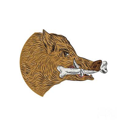 Wild Boar Razorback Bone In Mouth Drawing Poster by Aloysius Patrimonio