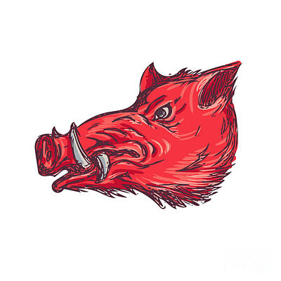 Wild Boar Razorback Head Side Drawing Poster by Aloysius Patrimonio