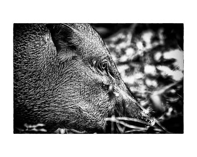 Poster featuring the photograph Wild Boar by Wade Courtney