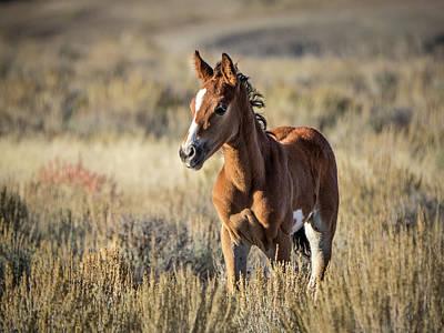 Wild Colt In Sand Wash Basin - Northwest Colorado Poster