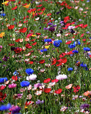 Wild Flower Meadow 2 Poster