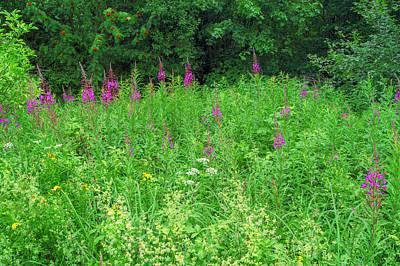 Wild Flowers And Shrubs In Vogelsberg Poster