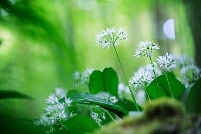 Wild Garlic Spring Wildflower Poster