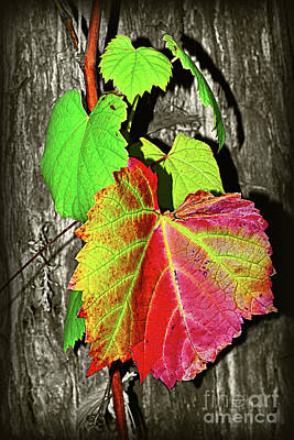 Poster featuring the photograph Wild Grape Vine II By Kaye Menner by Kaye Menner