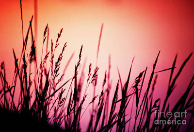 Poster featuring the photograph Wild Grasses by Scott Kemper