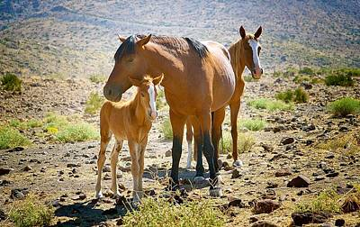 Wild Horse Family Poster