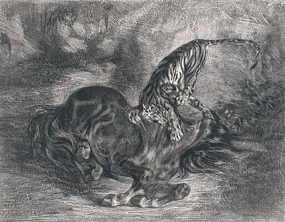 Wild Horse Felled By A Tiger Poster by Eugene Delacroix
