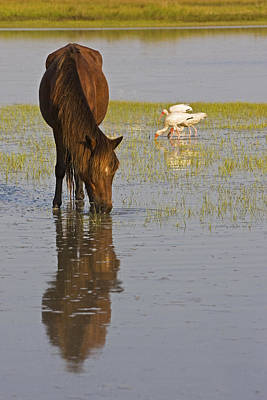 Wild Horse Reflection Poster