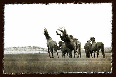 Wild Horse Series  - Left Hoof To The Jaw Poster